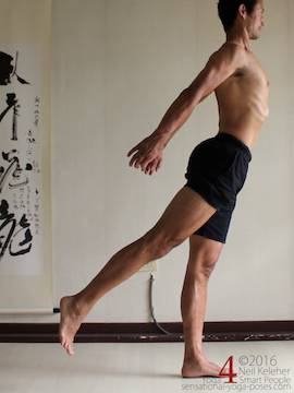 As an example of muscle control, in this standing back bend the spinal erectors are activated to bend the spine backwards. The gluteus maximus and hamstrings are also active to extend (move backwards) the hip of the lifted leg. Neil Keleher. Sensational Yoga Poses.