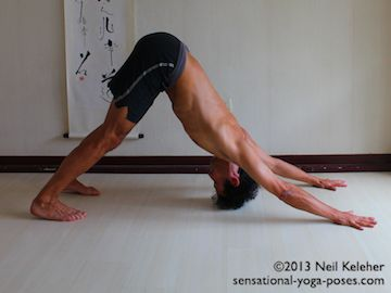 downward dog with knees straight and top of the head nearly touching the floor. In this pose the focus is on moving the shoulder blades towards the head and also on using the deltoids to bend the shoulder backwards with the arms over the head. Yoga shoulder stretches. Neil Keleher. Sensaitonal Yoga Poses.