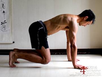 Scapular stabilization, dog pose, protraction on all fours. Neil Keleher. Sensational Yoga Poses.